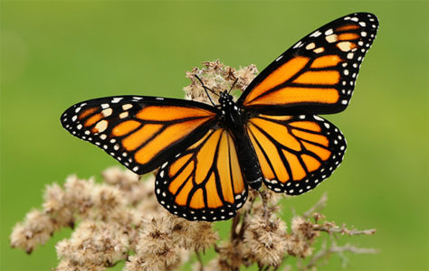 Natural Reserves: Monarch Butterfly Sanctuary