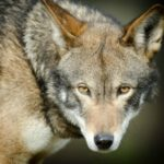 Nature Smart: Endangered Species in America II