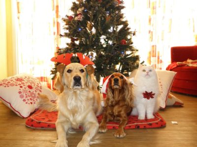 Best Presents for Pets